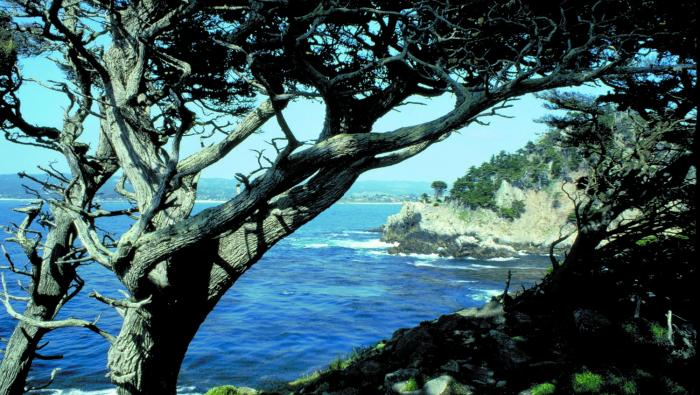 Image of Featured County of the Week: Monterey