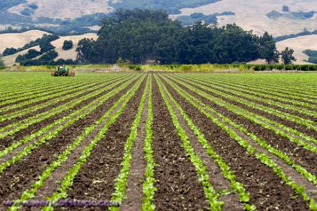 Image of Farmland Protection Gets Much-needed Attention at Napa Conference