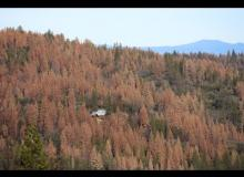 Tree Mortality: 29 Million and Counting