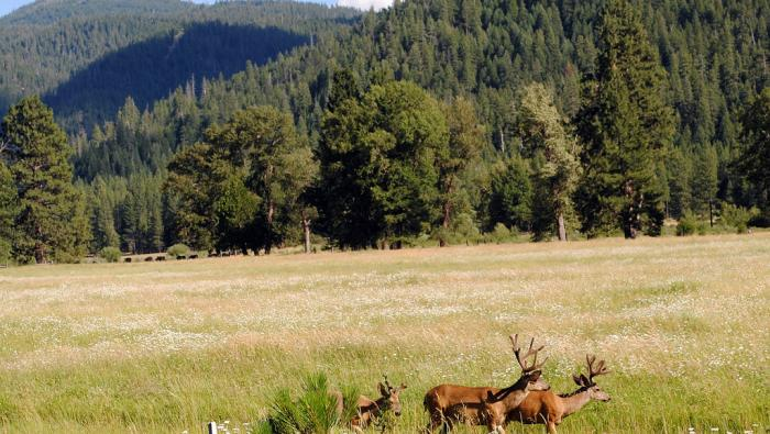 Image of Featured County of the Week: Plumas