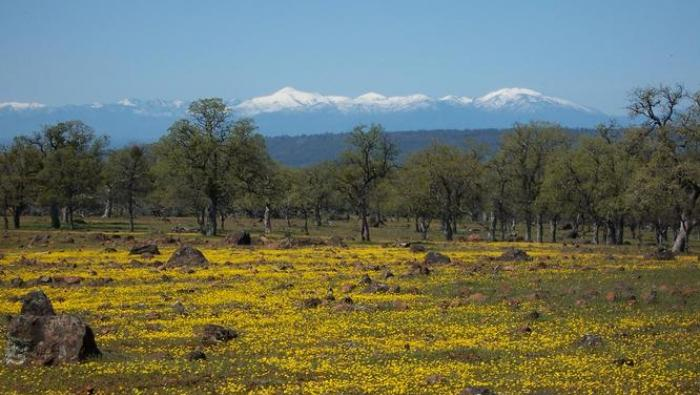 Image of Featured County of the Week: Tehama