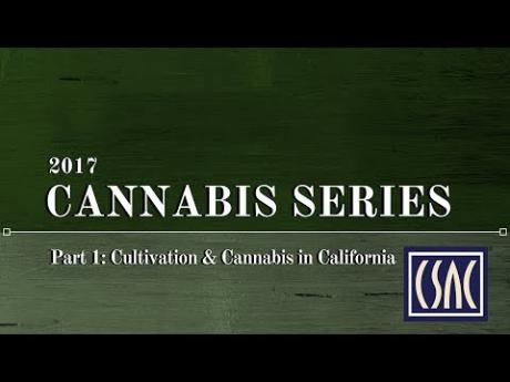 Cultivation and Cannabis in California