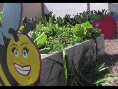 Alameda County – Dig Deep Farms