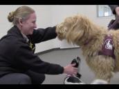 Riverside County – Southwest Juvenile Hall Canine Program