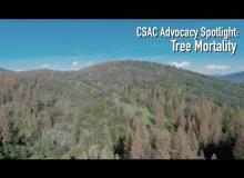 CSAC Advocacy Spotlight: Tree Mortality